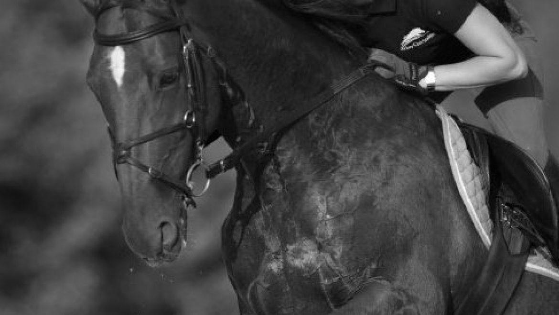 מחלת הסטרנגלס (Strangles) אצל סוסים