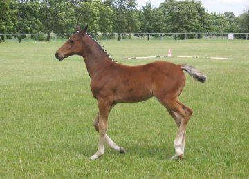 כיצד חושבים סוסים?