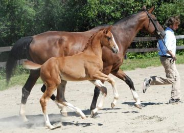 10 Tips for Better Trot Lengthenings